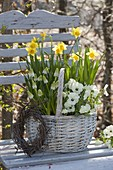 White handle basket planted with Viola cornuta, Muscari 'Alba'