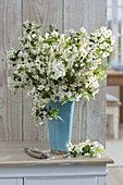 Blossoming branches of malus (ornamental apple) in blue vase