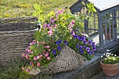 Basket with Dicentra spectabilis, Bellis