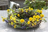 Wreath of tendrils decorated with Taraxacum, Ajuga