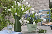 Straeusse aus Tulipa 'Calgary' (Tulpen) und Myosotis (Vergissmeinnicht)