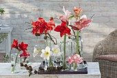 Winter decoration with Hippeastrum and Larix branches
