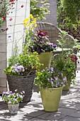 Arrangement of green pots and basket of edible plants