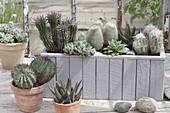 Wooden box and pots planted with cactus and succulents
