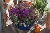 Blue tin bowl with Viola cornuta, Calluna vulgaris