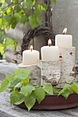 May green, stem pieces of betula (birch) as a candle holder