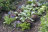 Vegetable bed with lettuce, salad (Lactuca), kohlrabi