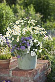 Wooden tub with Argyranthemum frutescens (Marguerite), Brachyscome