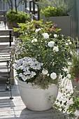 White tub with Rosa alba maxima, Lychnis flos-cuculi