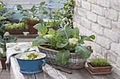 Basket with mini cauliflower 'Multi-Head' and Tagetes
