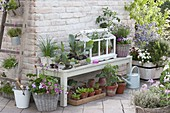 Terrace with preferred young plants and herbs