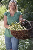 Woman with freshly picked camomile in the basket