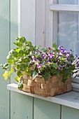 Wicker basket with spoonbill and Torenia 'Lovely Purple'