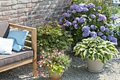 Lounge Corner on gravel terrasse with Hydrangea 'Endless Summer'