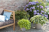 Lounge corner on gravel terrasse, Hydrangea 'Endless Summer'