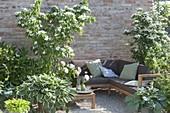 Green and white gravel terrace with sitting area Cornus kousa var. Chinensis