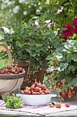 Freshly picked strawberries in bowl and in basket