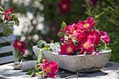 Fresh cut Rosa gallica 'scarlet fever' and R. multiflora