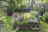 Summer bed with hazel grove border