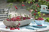 Freshly picked sour cherries in wooden bowl and cup