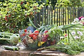 Wire basket with freshly harvested vegetables, zucchini