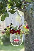 Lantern made of misused jam on the tree