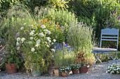 Pot group on gravel terrace Daucus carota, Calendula