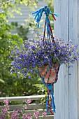 Hanging macrame basket made of colorful ribbons with Lobelia Hot 'Bavaria'