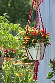 Macrame hanging basket made of colorful ribbons with a hint of laces