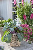 Basket with blue kohlrabi and Nemesia 'Cassis'