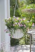 Hanging flower basket with Lathyrus 'Cupid Pink' (dwarf vetch)