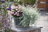Zinc box with Dianthus 'White and Red' (carnation) and Helichrysum