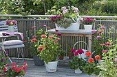 Balcony with zinnia, white metal jardiniere planted with Calibracho