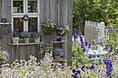 Garden house with blue flowers