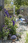 Blue-violet planted seating area on the tool shed