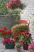 Red flowered balcony with red chair, Calibrachoa 'Vulcano'