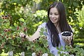Young woman picking blackberries (Rubus fruticosus)