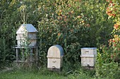 Home-built beehives are protected by a hobby beekeeper
