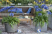 Terrace in the evening light, tub with agapanthus, lanterns