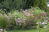 Flower bed with seeded, annual summer flowers