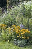 Blau - gelbes Spaetsommerbeet mit Stauden und Gräsern
