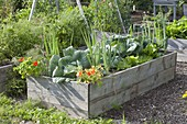 Homebuilt raised bed of boards with vegetables