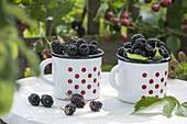 Freshly picked blackberries in dotted enamel
