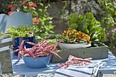 Enamel bowl with freshly picked Borlotti beans