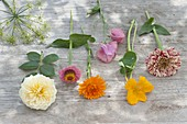 Ingredients tableau for late summer bouquet