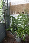 Indoor plants and potted plants over summer