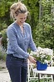Woman placing white flowers in blue enamel pots