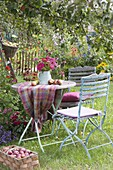 Apple harvest and seating place under apple tree