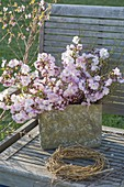 Rustic pot with branches of Prunus 'Accolade' (ornamental cherry)