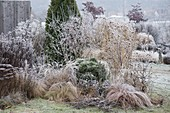 Wintery bed with hoarfrost on perennials, grasses and shrubs